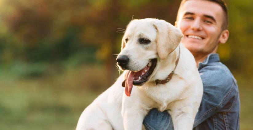 Labrador Gewicht – Wie viel sollte mein Labrador wiegen?