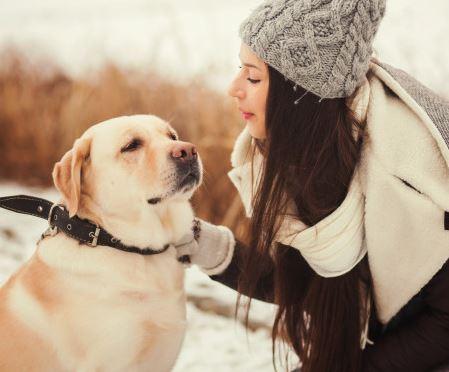 Erziehung eines Labradors