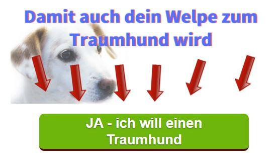 Labrador Welpe Traumhund Generator